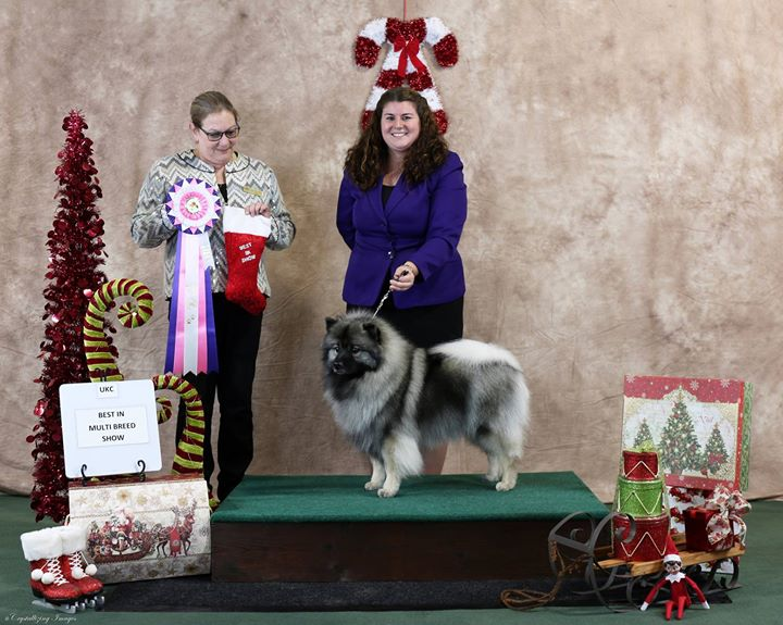 UKC Best in Show!