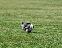 Keely running