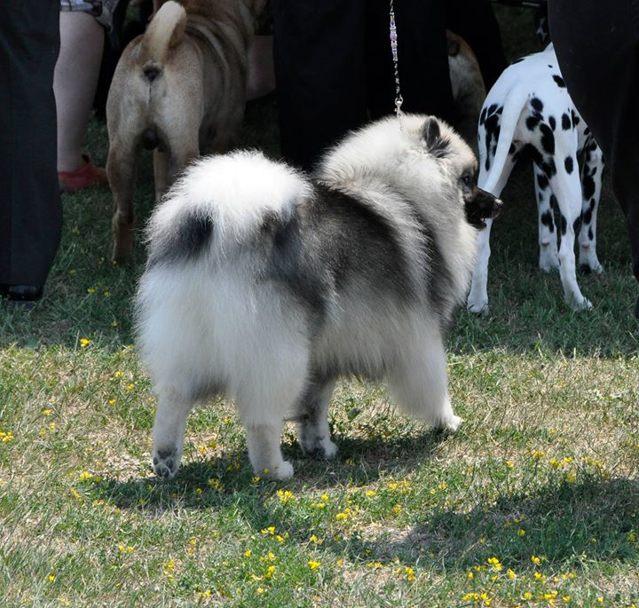 July 1 2012 at the dog show