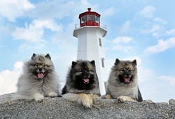 Lexie, Raevyn, Zivah at Peggy's Cove. This is when everyone was coming up asking if they could take
