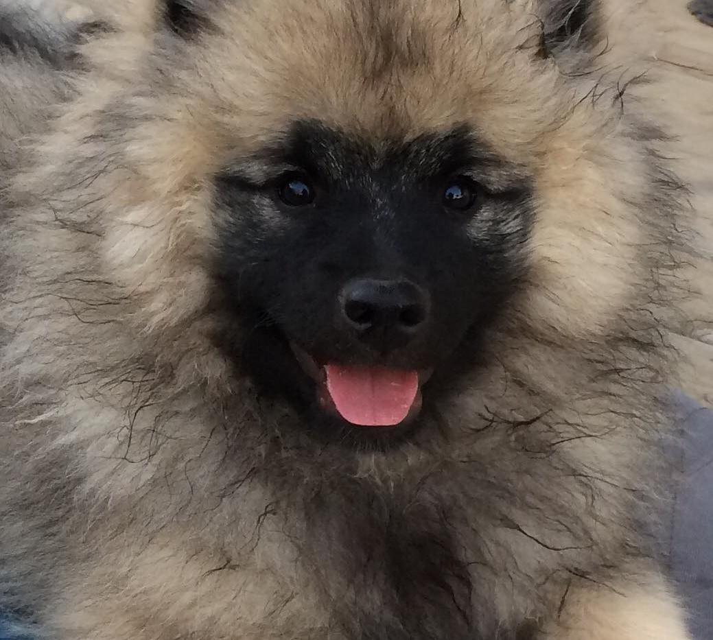 Brynley older puppy.jpg