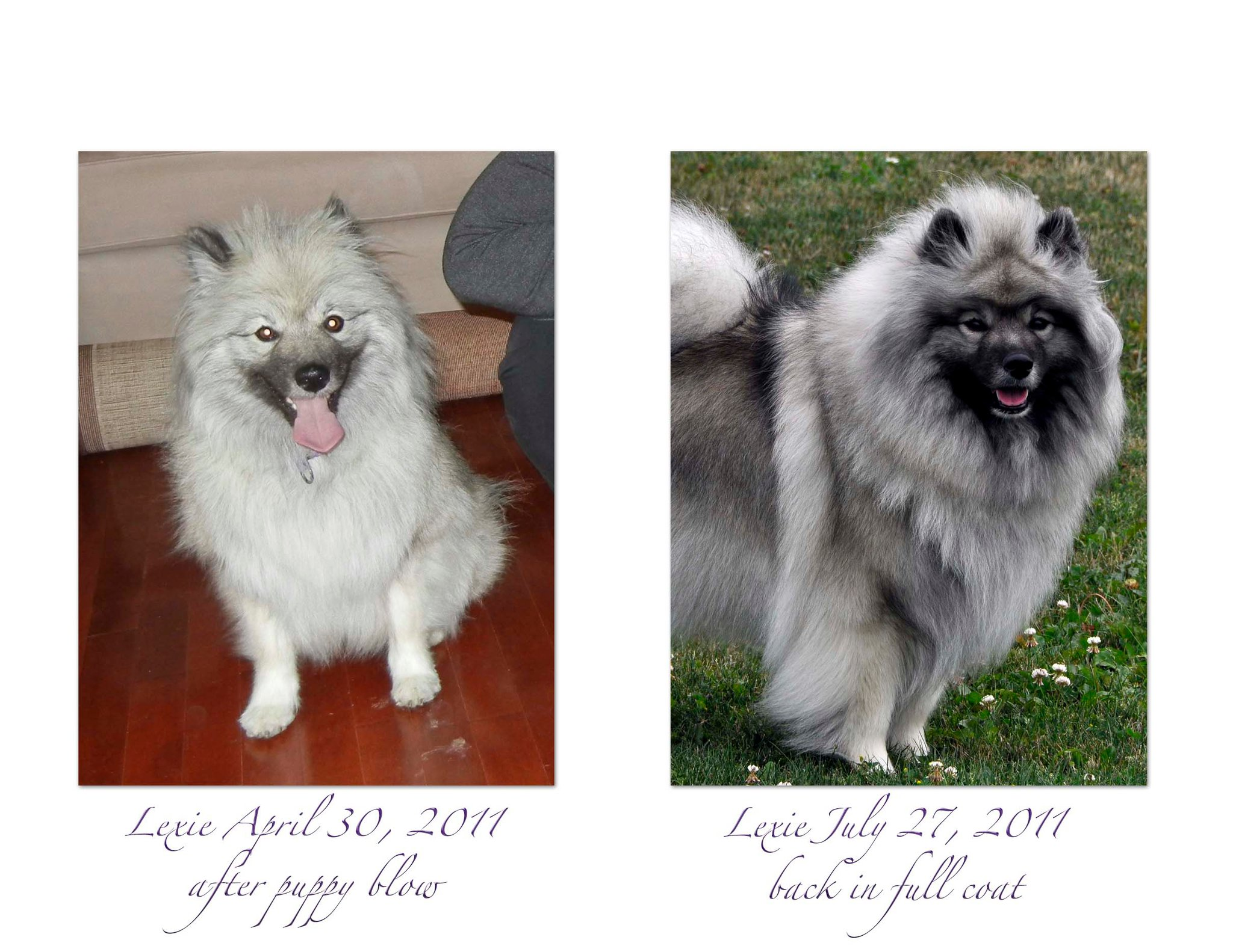 Lexie before and after puppy blow