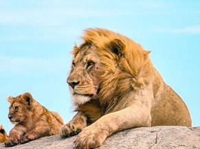 Endless Plains - The Serengeti