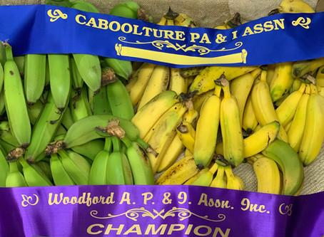 Award Winning Bananas!