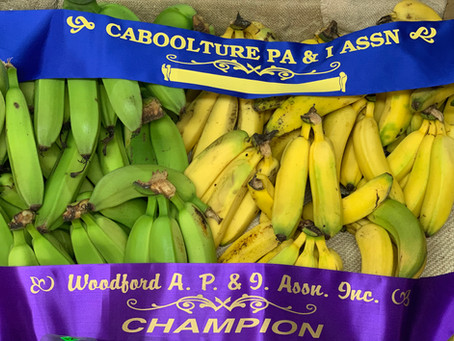 Award Winning Bananas!