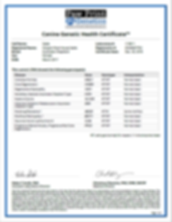 Sadie Genetic Certificate.PNG
