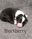 Blackberry1.jpg
