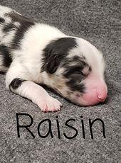 Raisin1.jpg