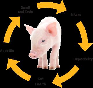 pig cycle.png