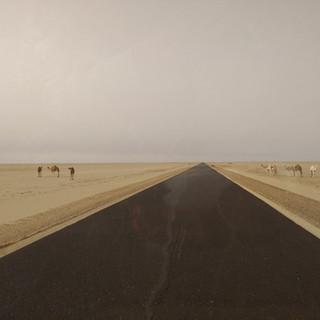 07-01-C-Camels.jpg