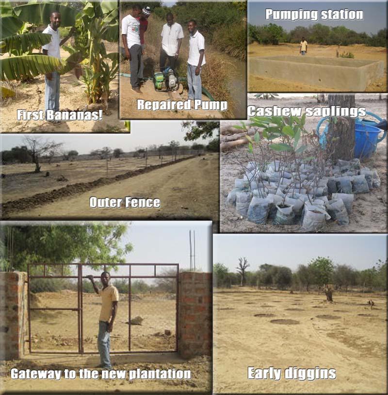 Early Plantation