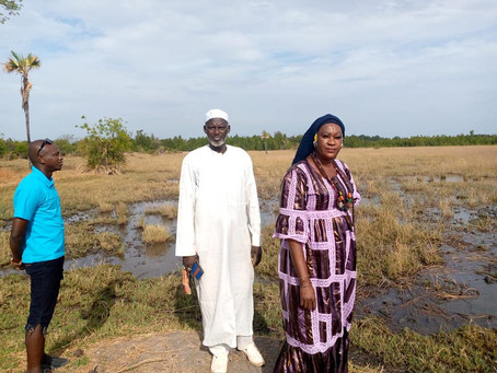 Multi Benefits of Mangrove Development in CRR