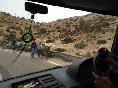 06-16 B Donkey.jpg