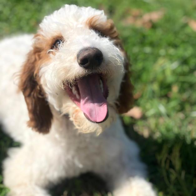 Sponsor a PAWS Dog