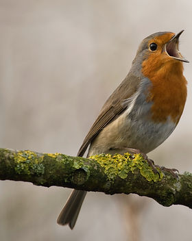 oiseau © Jan Meeus.jpg