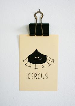 cercus_-750x1061