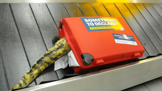 Crocodile Suitcase for Belastingdienst
