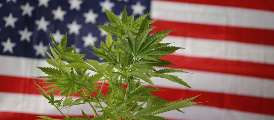 """US: """"We continue to see cannabis as a strong market"""""""