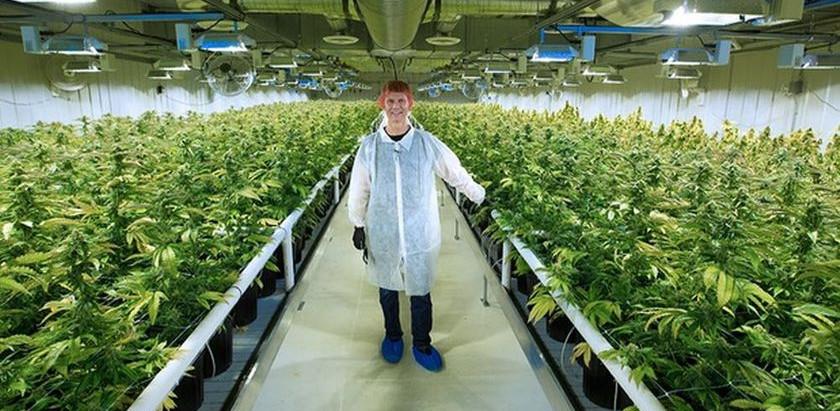 Aurora Cannabis buys MedReleaf for C$3.2 billion