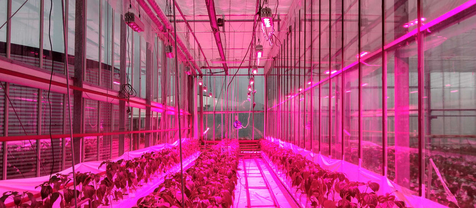 """Advancements in LED will have major impact on horticulture"""