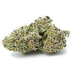 lavender-x-purple-kush.jpg