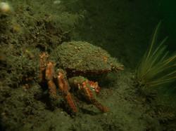 UK Diving 2013 (4)