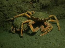 UK Diving 2013 (5)