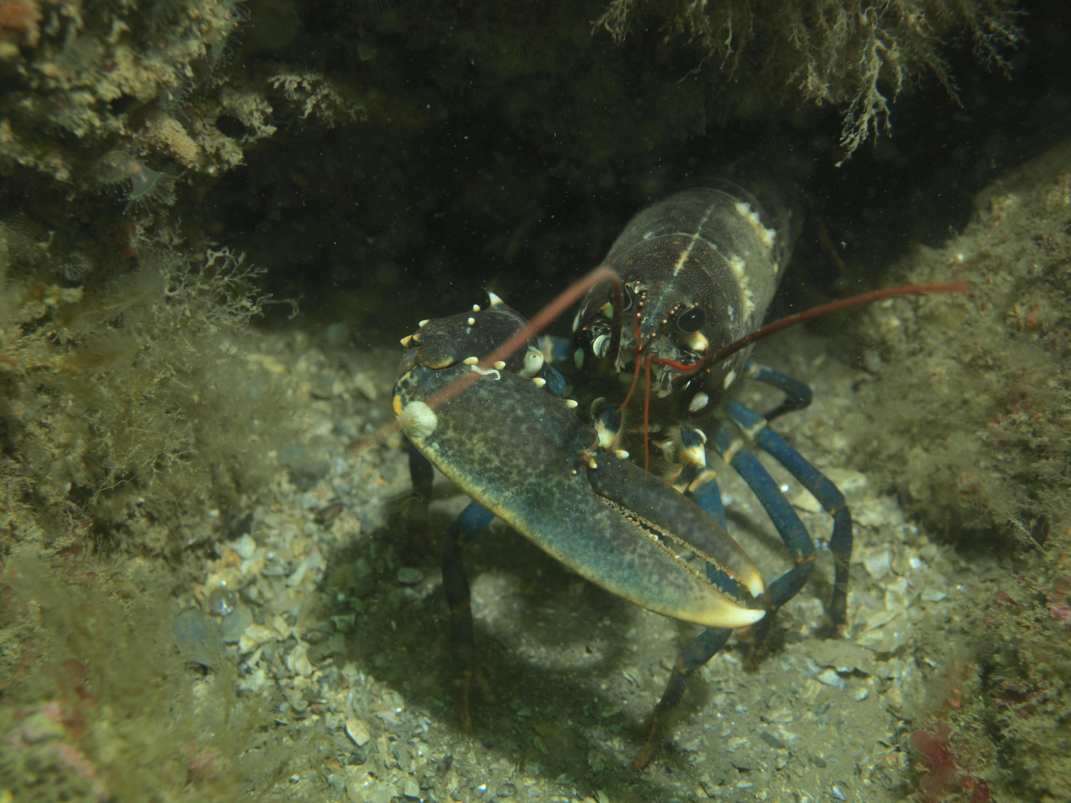 UK Diving 2013