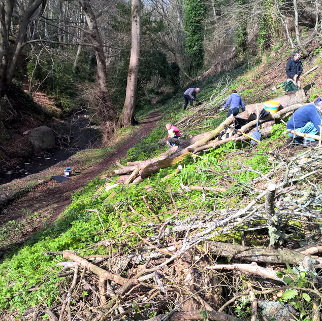 Tree Planting In The Dell