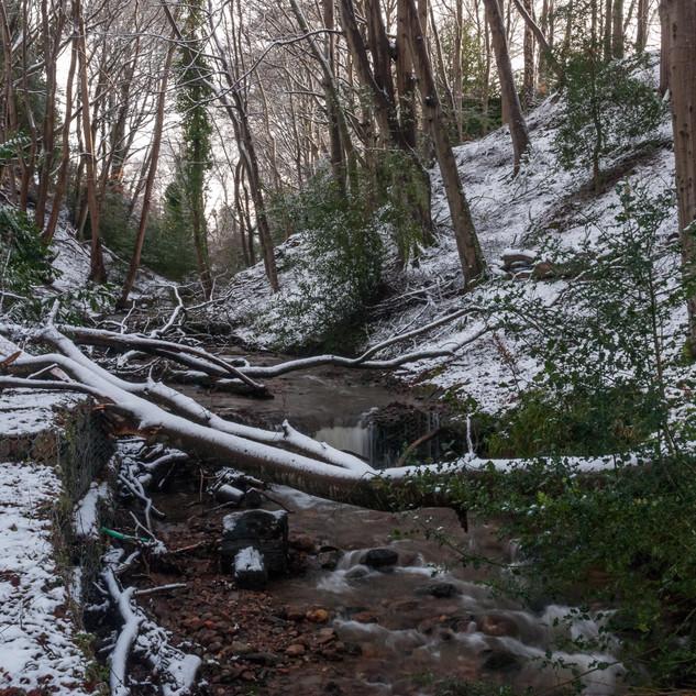 Fallen trees across the burn in winter