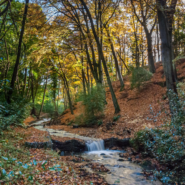 The Dell in Autumn