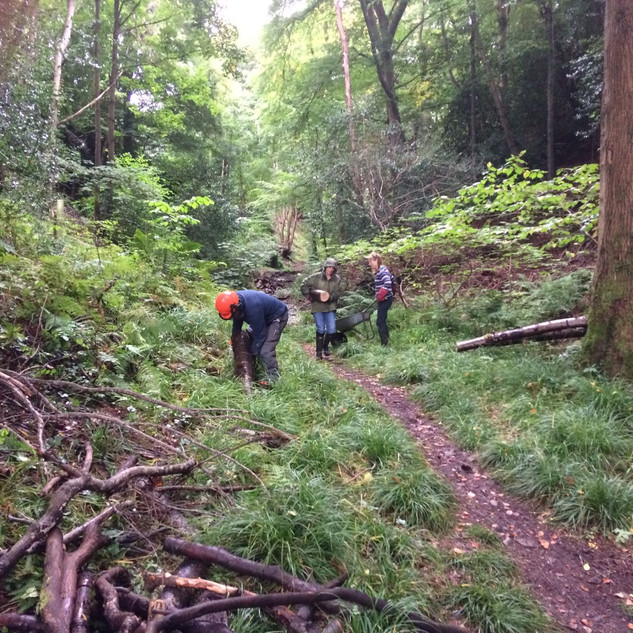 Managing fallen trees in the Dell