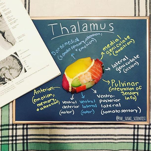 Sushi Science | Janelle Letzen | Thalamus