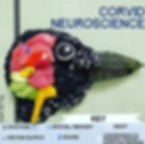sushi science brains crow