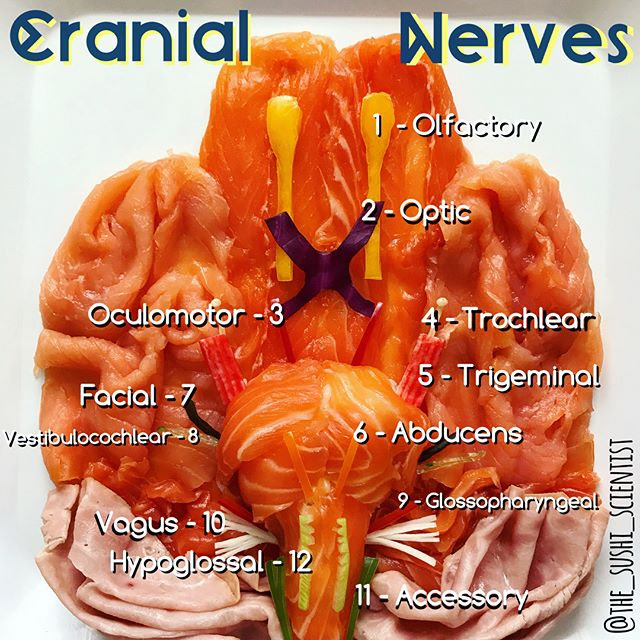 Sushi Science | Janelle Letzen | Cranial Nerves