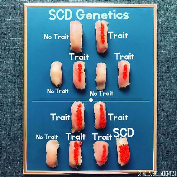 Sushi Science | Janelle Letzen | Sickle Cell Disease
