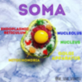 Sushi Science   Janelle Letzen   Soma
