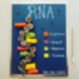 Sushi Science | Janelle Letzen | RNA