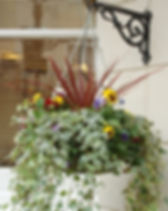 Seasonal hanging baskets for sale