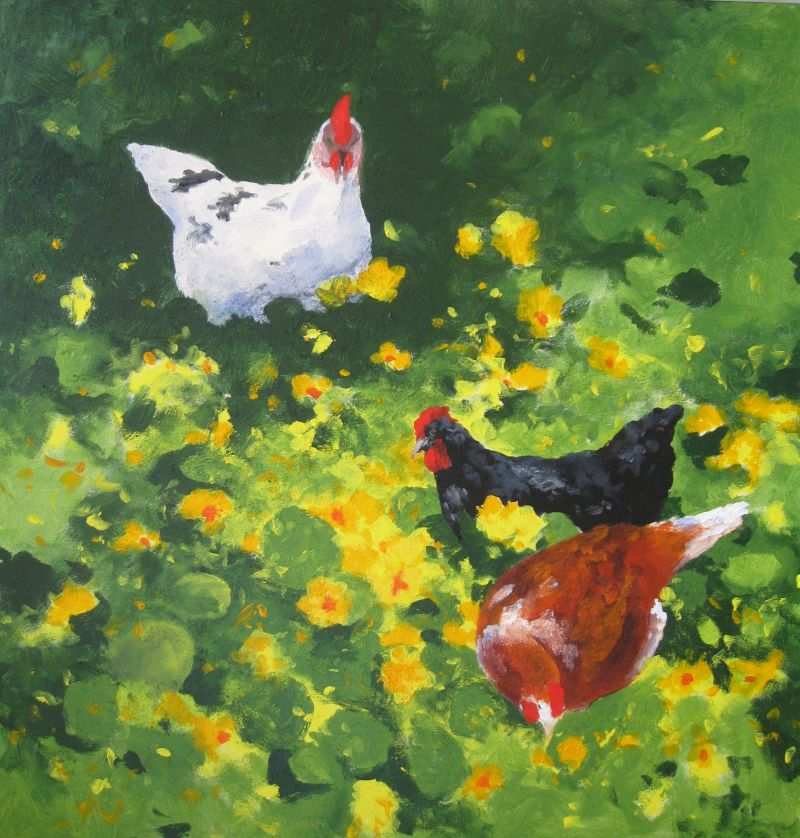 Chooks SOLD