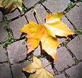 Gevallen bladeren