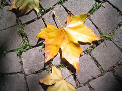 maintenance repair damage fall autumn leaves clean maintain value reduce costs annual every year
