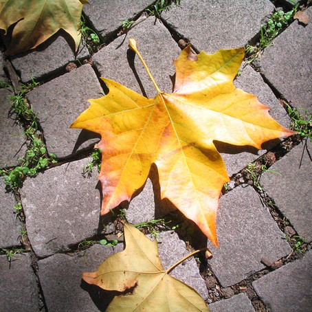 """Old autumn leaves"" - La storia di Les"