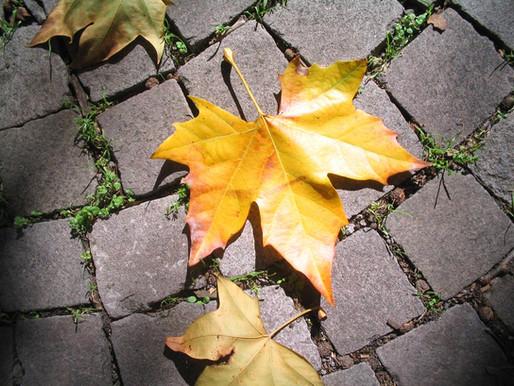 Rituales para otoño