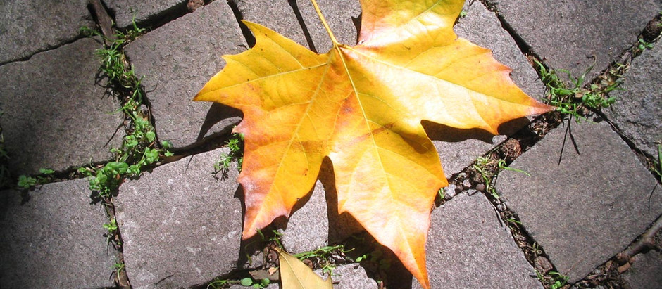 What's your favorite thing about Fall? Mine is Change.