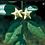 Thumbnail: Hoya cf coronaria