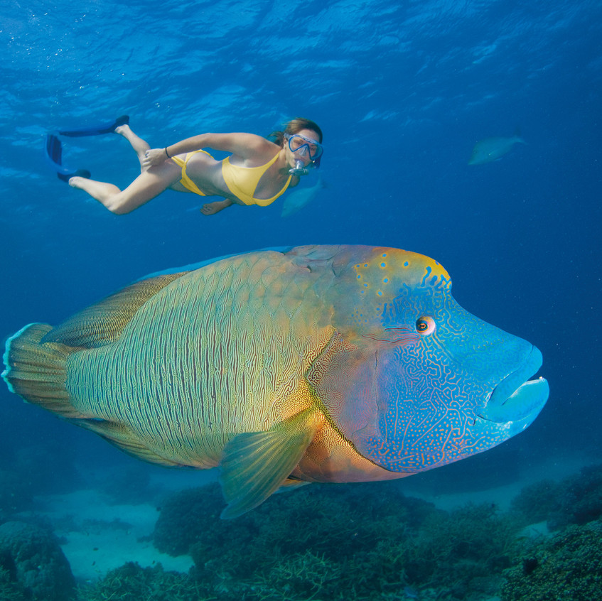 Reef diving snorkelling Credit Tourism Queensland. jpg
