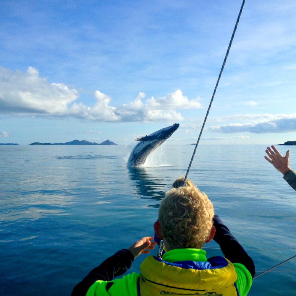 whale watching Whitsundays when you GoBareboating