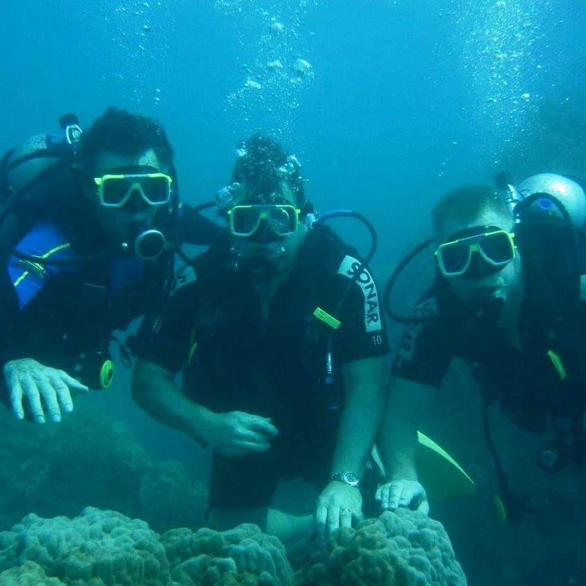 Diving Whitsunday Reefs