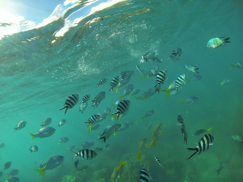 Snorkelling underwater fish